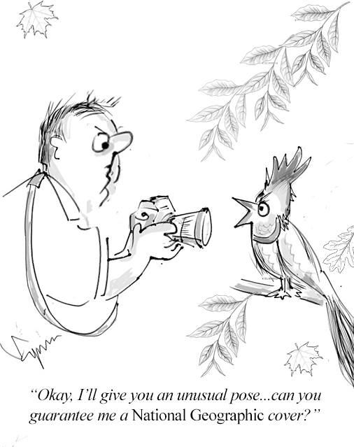 Bird and National Geographic Cartoon